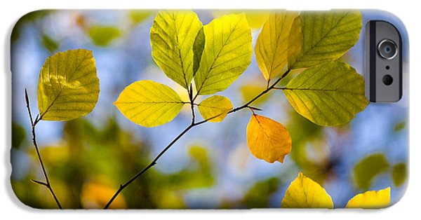 Nature Study iPhone Cases - Sunlit Autumn Leaves iPhone Case by Natalie Kinnear