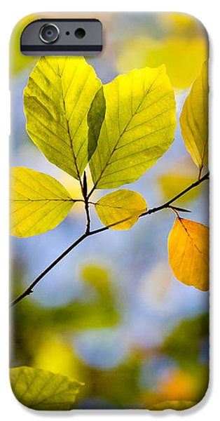 Sunlit Autumn Leaves iPhone Case by Natalie Kinnear