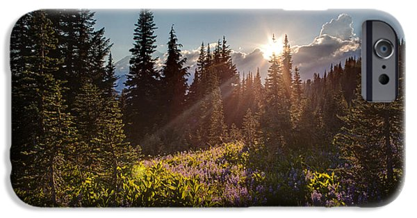 Mount Rainier iPhone Cases - Sunlit Flower Meadows iPhone Case by Mike Reid