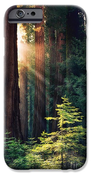 Heaven Photographs iPhone Cases - Sunlit from Heaven iPhone Case by Jane Rix