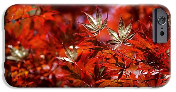 Tree Art iPhone Cases - Sunlit Japanese Maple iPhone Case by Rona Black