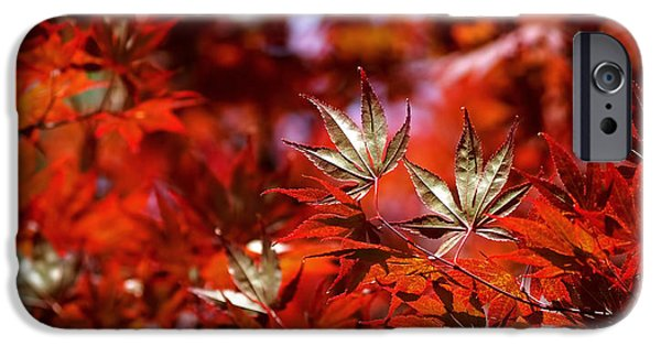 Colorful Abstract iPhone Cases - Sunlit Japanese Maple iPhone Case by Rona Black