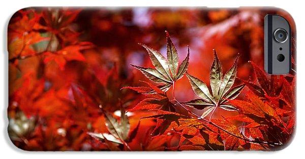 Botanical Photographs iPhone Cases - Sunlit Japanese Maple iPhone Case by Rona Black