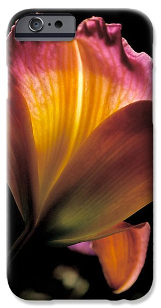 Sunlit Lily iPhone Case by Rona Black