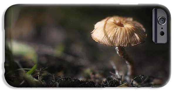 Forest Floor iPhone Cases - Sunlit Mushroom iPhone Case by Scott Norris