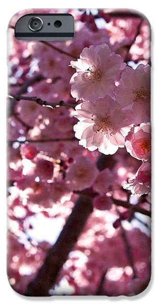 Sunlit Pink Blossoms iPhone Case by Rona Black