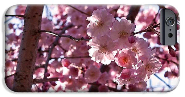 Cherry Blossoms Photographs iPhone Cases - Sunlit Cherry Blossoms iPhone Case by Rona Black