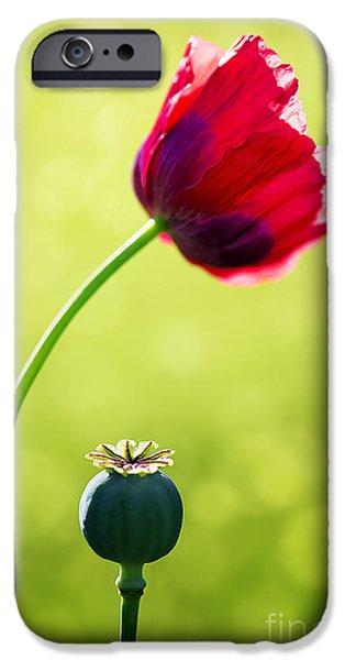 Sunlit Poppy iPhone Case by Natalie Kinnear