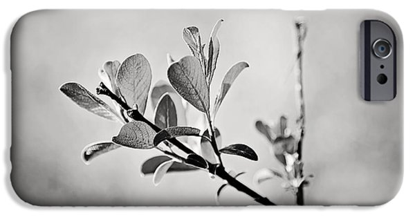 Tree Print Digital iPhone Cases - Sunlit Sprig of Leaves in Black and White iPhone Case by Natalie Kinnear