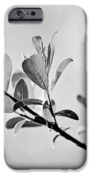 Sunlit Sprig of Leaves in Black and White iPhone Case by Natalie Kinnear