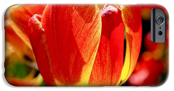Nature iPhone Cases - Sunlit Tulips iPhone Case by Rona Black
