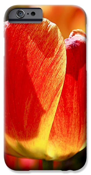 Sunlit Tulips iPhone Case by Rona Black