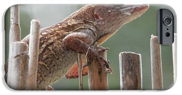 Bamboo Fence iPhone Cases - Sunning Lizard iPhone Case by Belinda Lee