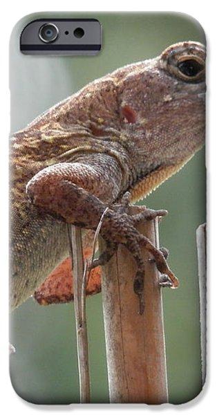 Sunning Lizard iPhone Case by Belinda Lee