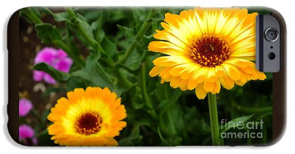 Botanical Photographs iPhone Cases - Sunny day iPhone Case by Chandra Nyleen