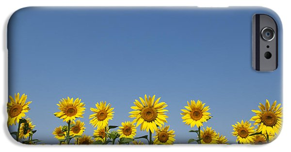 Sunflowers Photographs iPhone Cases - Sunny Flowers  iPhone Case by Tim Gainey