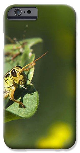 Sunny Green Grasshopper iPhone Case by Christina Rollo
