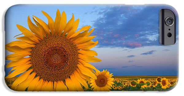 Morning iPhone Cases - Sunny Side Up iPhone Case by Darren  White