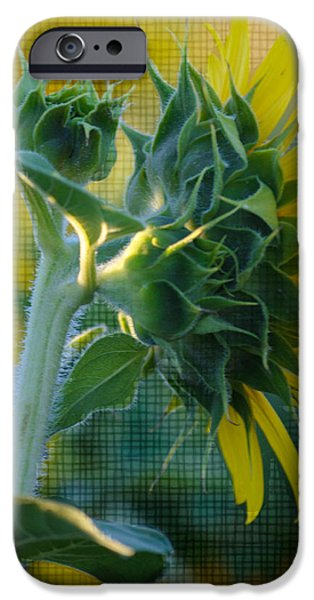 Sunny with texture iPhone Case by Rima Biswas