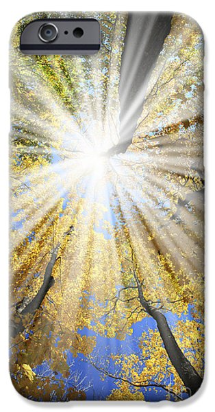 Autumn Woods iPhone Cases - Sunrays in the forest iPhone Case by Elena Elisseeva