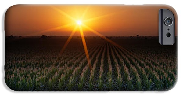 Crops iPhone Cases - Sunrise, Crops, Farm, Sacramento iPhone Case by Panoramic Images