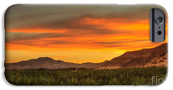 Sweet Corn Farm iPhone Cases - Sunrise Over A Corn Field iPhone Case by Robert Bales