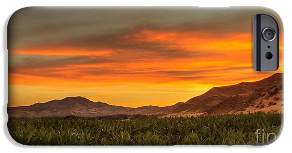 Emmett iPhone Cases - Sunrise Over A Corn Field iPhone Case by Robert Bales