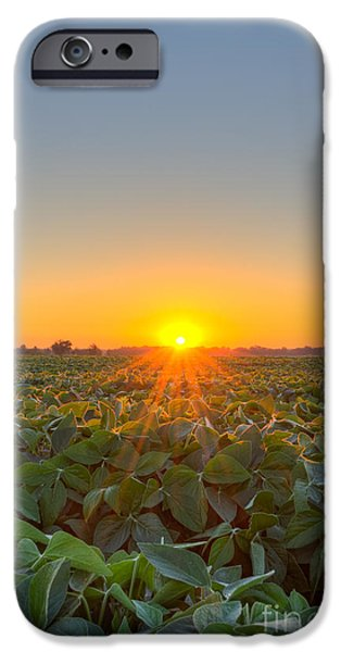 Michael Versprill iPhone Cases - Sunrise over a field iPhone Case by Michael Ver Sprill
