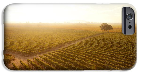 Grapevines iPhone Cases - Sunrise Over the Vineyard iPhone Case by Diane Diederich