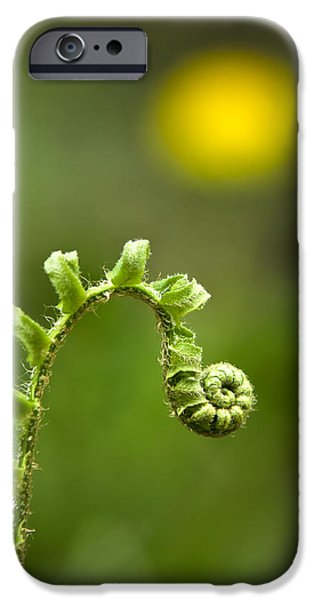Nature Abstracts iPhone Cases - Sunrise Spiral Fern iPhone Case by Christina Rollo