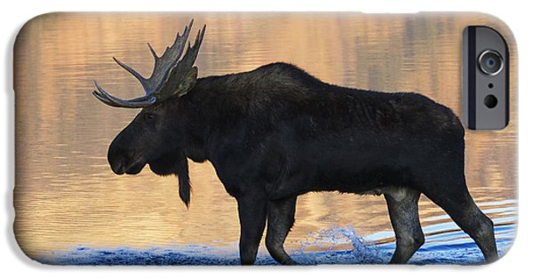Bull Moose iPhone Cases - Sunrise Stroll iPhone Case by Mark Kiver