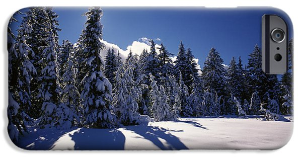 South Rim iPhone Cases - Sunrise Through Snow Covered Fir Trees iPhone Case by Panoramic Images