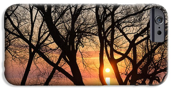 Willow Lake iPhone Cases - Sunrise Through the Chaos of Willow Branches iPhone Case by Georgia Mizuleva
