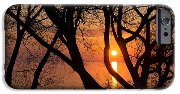 Willow Lake iPhone Cases - Sunrise Through the Willows - Lake Ontario Toronto Canada  iPhone Case by Georgia Mizuleva