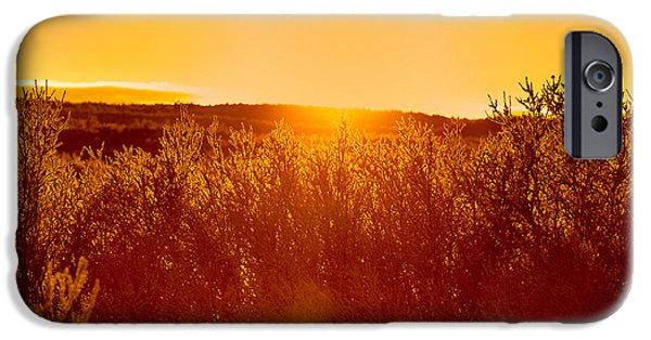 Lapland iPhone Cases - Sunset And Trees In The Frozen iPhone Case by Panoramic Images