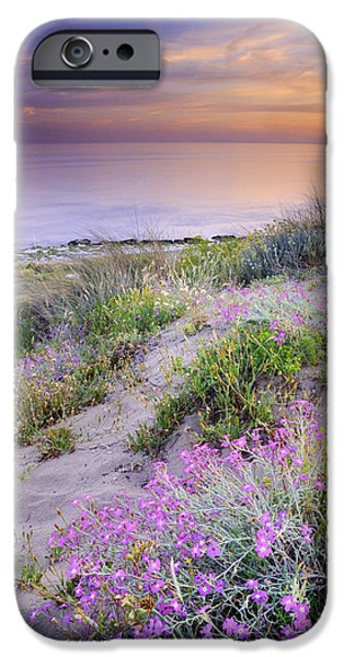 Malaga iPhone Cases - Sunset at the beach  Flowers on the sand iPhone Case by Guido Montanes Castillo