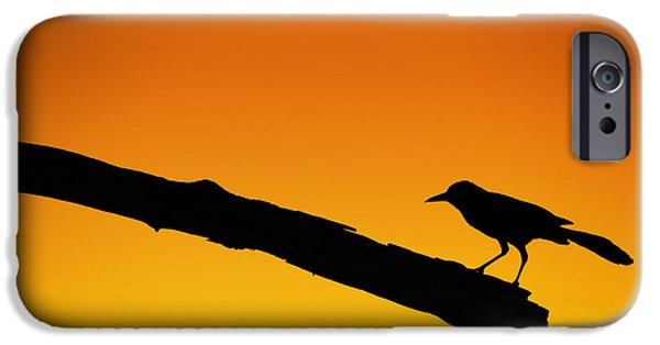 Recently Sold -  - Birds iPhone Cases - Sunset Grackle Silhouette iPhone Case by Andres Leon