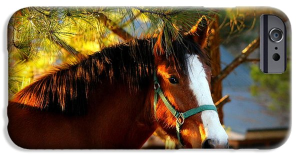 Painter Photographs iPhone Cases - Sunset Horse iPhone Case by Reid Callaway