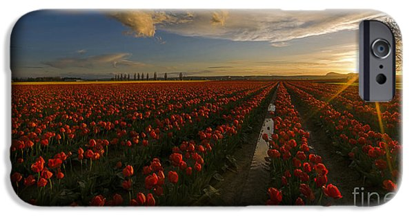 Sunset iPhone Cases - Sunset in the Skagit Valley iPhone Case by Mike Reid