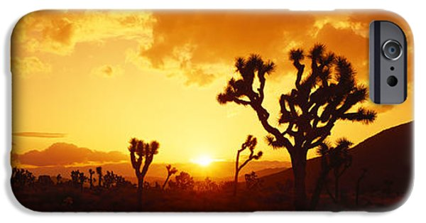 Harsh iPhone Cases - Sunset, Joshua Tree Park, California iPhone Case by Panoramic Images