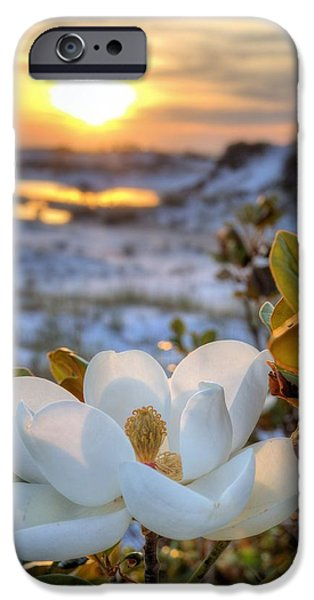 Florida Panhandle iPhone Cases - Sunset Magnolia iPhone Case by JC Findley