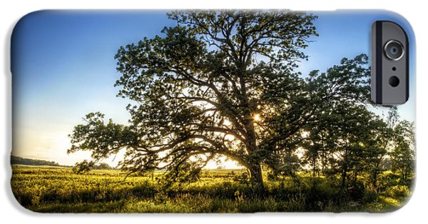 Oak Creek iPhone Cases - Sunset Oak iPhone Case by Scott Norris