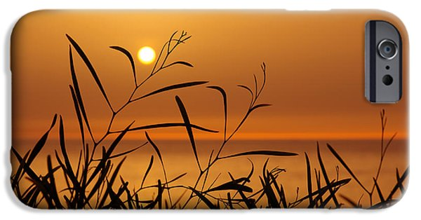 Backdrop iPhone Cases - Sunset on Leaves  iPhone Case by Carlos Caetano