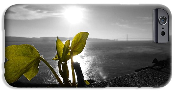 Sun Rays Pyrography iPhone Cases - Sunset Over Alcatraz Plants iPhone Case by Fabien White