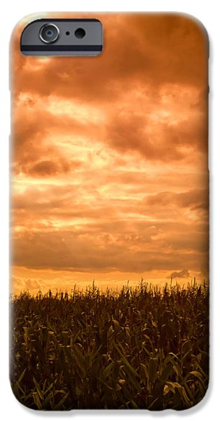 Crops iPhone Cases - Sunset Corn field iPhone Case by Wim Lanclus