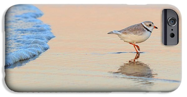 Cape Cod Landscapes iPhone Cases - Sunset Piping Plover iPhone Case by Bill  Wakeley