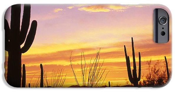 Harsh iPhone Cases - Sunset Saguaro Cactus Saguaro National iPhone Case by Panoramic Images