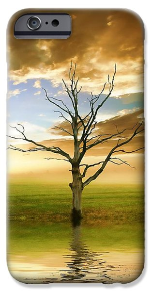 Reflecting Trees iPhone Cases - Sunset Tree iPhone Case by Sharon Lisa Clarke