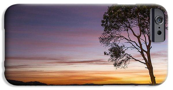 Beach Landscape iPhone Cases - Sunset Tree Silhouette iPhone Case by Rachel Cash
