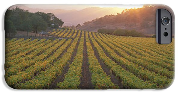 Winery Photography iPhone Cases - Sunset, Vineyard, Napa Valley iPhone Case by Panoramic Images